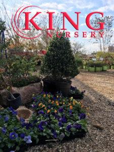 King Nursery Lubbock