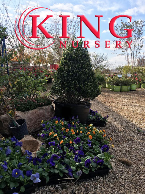 king nursery lubbock