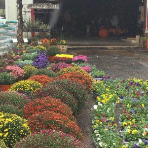 fall_flowers_1