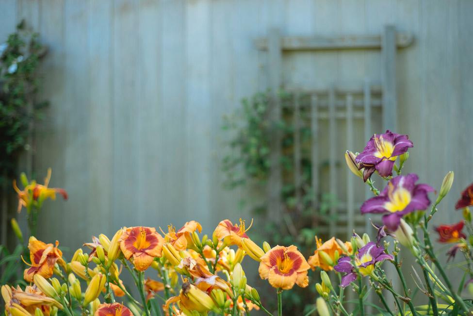 Flowers Lubbock